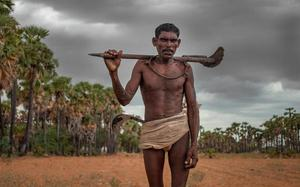 The plight of tappers in palm plantations of Tamil Nadu