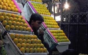 Mango exports may take a hit due to lower production