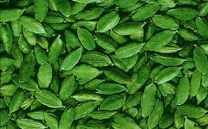 Tight supply pushes cardamom to new high