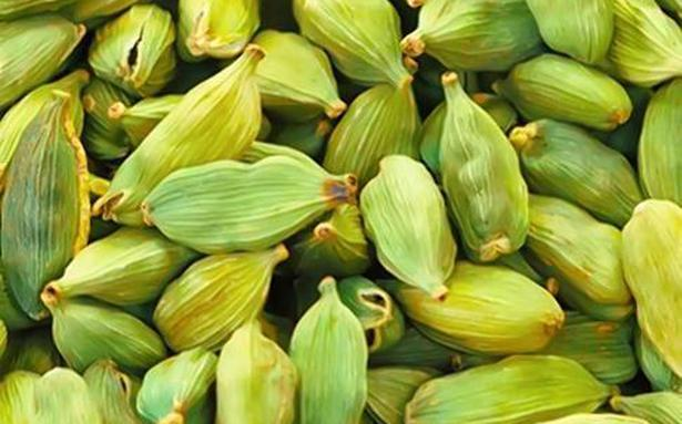 Cardamom market remains steady as prices edge up
