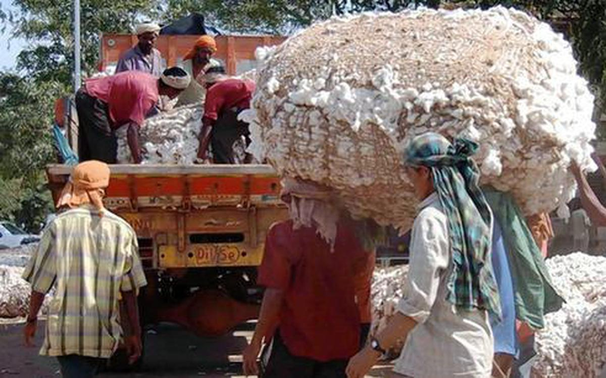 India's cotton output to decline to 343 lakh bales in FY19