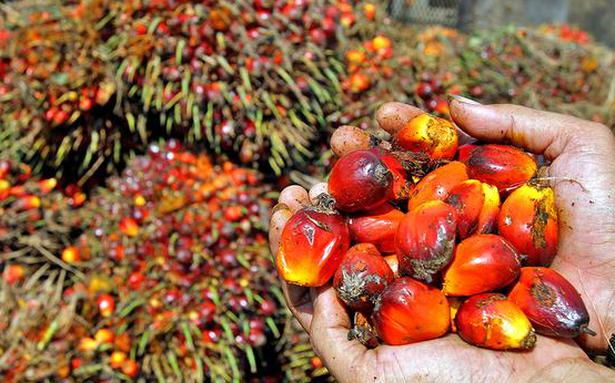 Indians pay over 60 per cent in taxes on palm oil