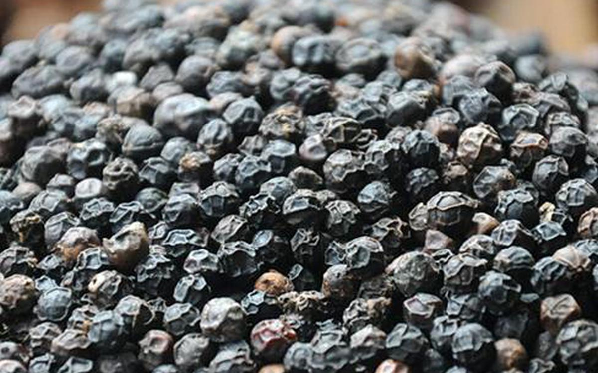 Illegal pepper imports hit domestic prices, demand - The