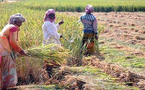 India invokes WTO peace clause for rice farmers