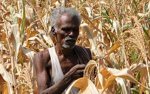 Govt may create 'de-risk pool' for crop-cover claims settlement
