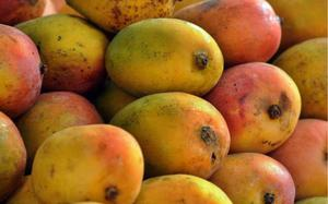 Health hazards of consuming artificially ripened fruits, vegetables