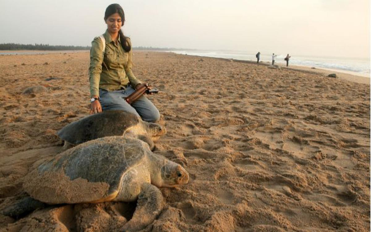 Indian shark researcher gets global recognition - The Hindu