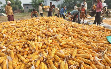 Image result for corn import
