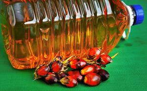 As duty on palm oil turns contentious, Delhi must act