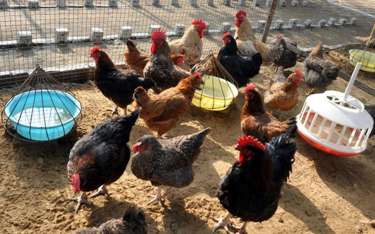 Poultry feed products prices up on dearer soyameal - The