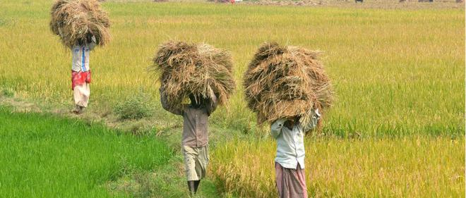 agriculture dependent population in india grew by 50 during 1980