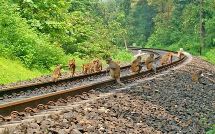 Image result for problems on railway tracks