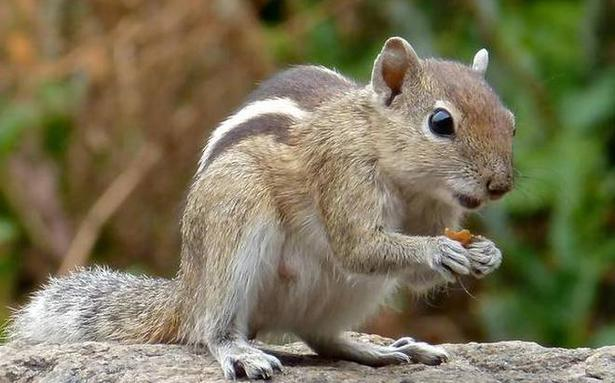 Squirrels are using plastic to build their nests - The Hindu BusinessLine