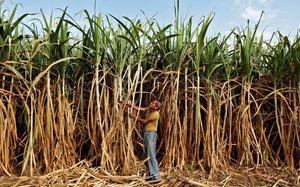 For sustaining the sugar sector, the Centre should push ethanol production