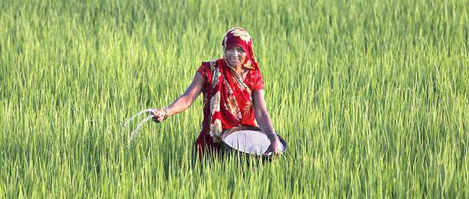 agriculture r d spend a reality check the hindu businessline