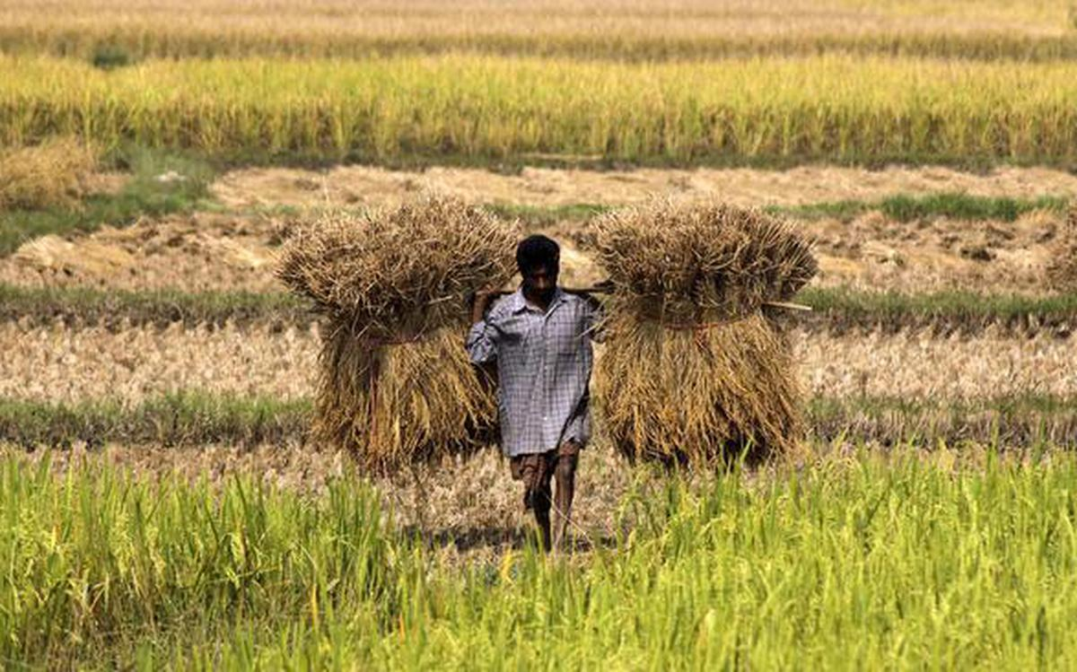 Helping farmers turn into millionaires, the Tata Trusts way