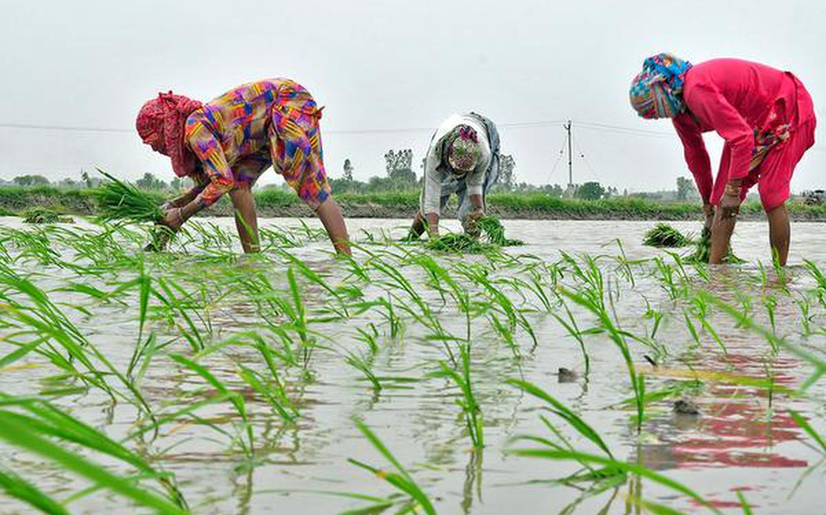 Haryana pushes for sustainable farming - The Hindu BusinessLine