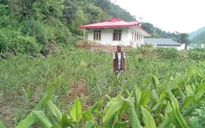 Natural farming works by all accounts, says banker-turned farmer
