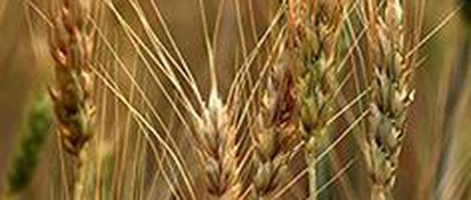 m p begins wheat purchase at 2 000 quintal the hindu businessline